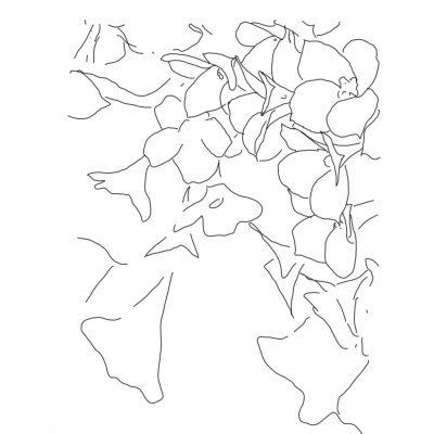flower bloosom