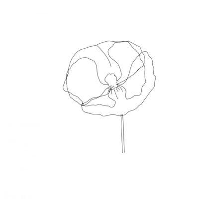 poppy sketch