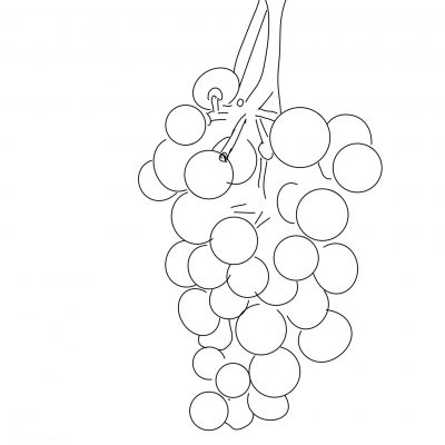 grapes_sketch