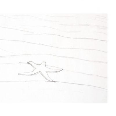 starfish_sketch