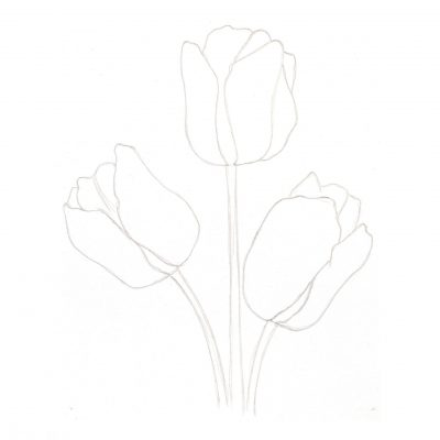 tulips_sketch