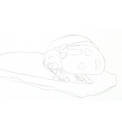 ladybug_sketch
