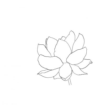 waterlilly_sketch
