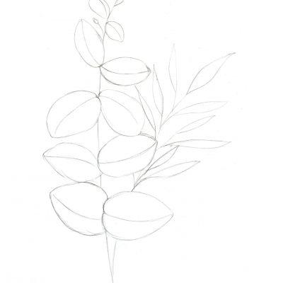euchalyptus_sketch.