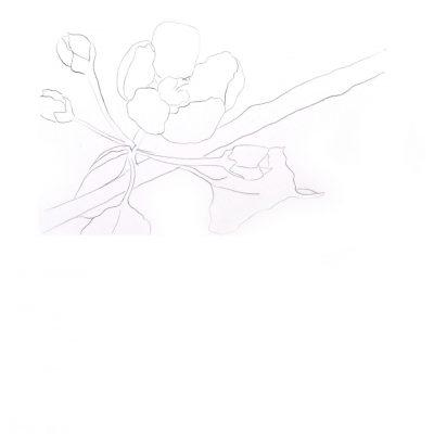 sketch_blossom