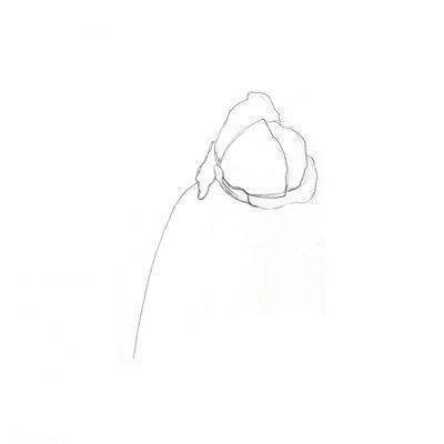 sketch_poppy